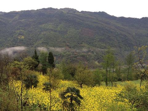 大邑雾山的图片