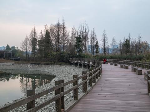 观音湖湿地公园旅游景点图片