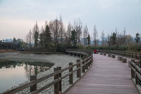 观音湖湿地公园的图片