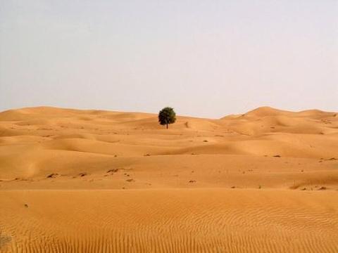沙迦旅游图片