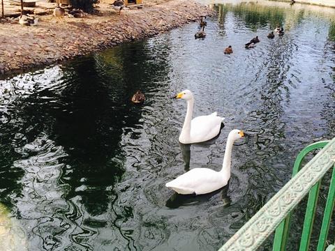 美神宫动物园旅游景点图片