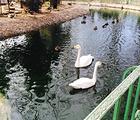 美神宫动物园