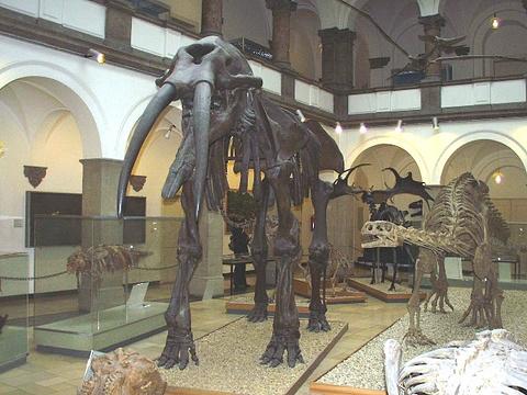 古生物博物馆旅游景点图片