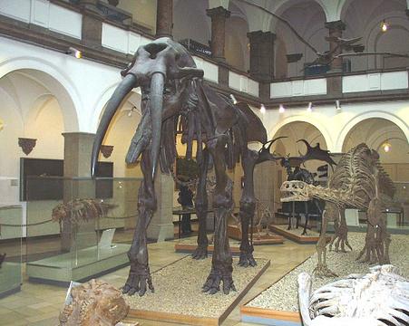 古生物博物馆的图片