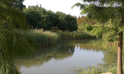 龙池国家森林公园的图片