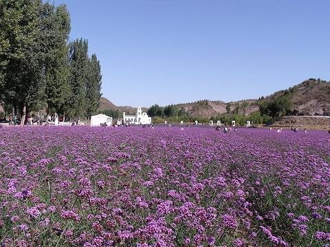 梦幻紫海香草庄园旅游景点图片