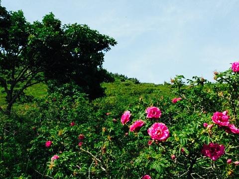 千亩玫瑰园景区旅游景点图片