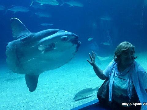 瓦伦西亚海洋水族馆旅游景点图片