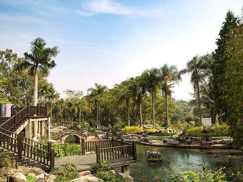广西药用植物园旅游景点图片