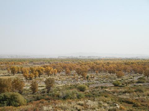 克拉玛依胡杨林部落旅游景点图片