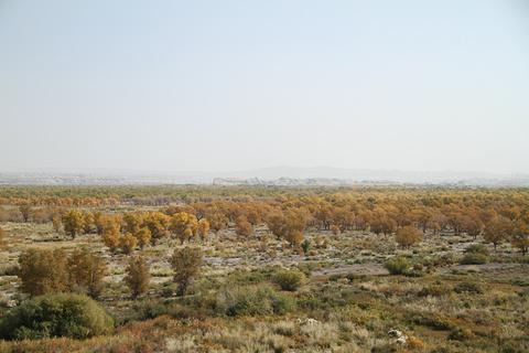 克拉玛依胡杨林部落的图片