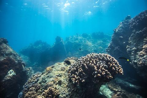 蜈支洲岛潜水