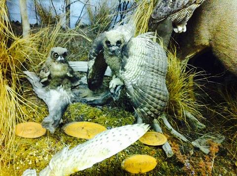 The Den - Jasper's Wildlife Museum