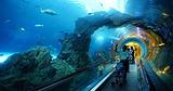 哈尔滨博物馆海洋世界