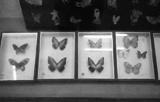 周尧昆虫博物馆