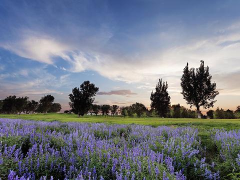 紫谷伊甸园旅游景点图片