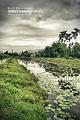 马太鞍湿地生态园区