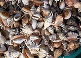巴厘贝壳博物馆