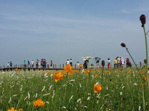 五花草甸旅游景点图片