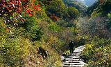锦山自然生态风景区