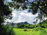火玛卢霞植物园