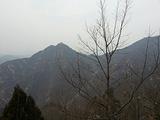 禅林寺古银杏风景园