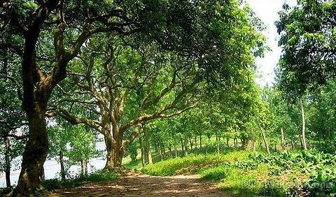 泸州旅游图片