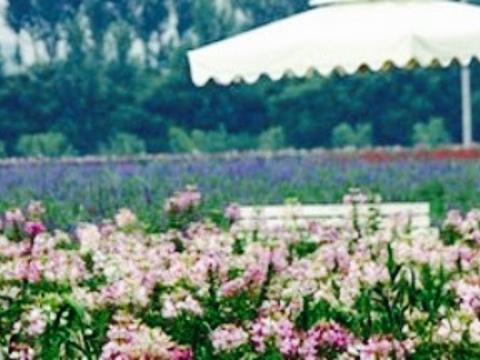 香草世界旅游景点图片