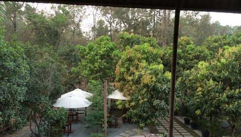 Tropical Rohal Village的图片
