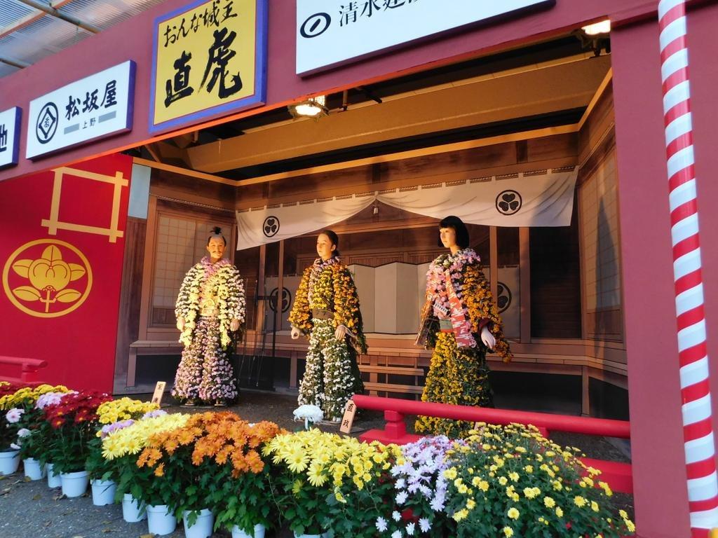 文京菊花节