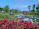 圣莲岛荷花博览园