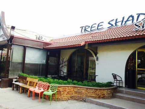Tree Shade旅游景点图片