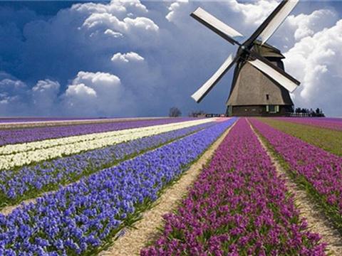 熏衣草世界旅游景点图片