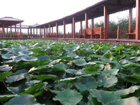 江南采珠游旅游景点图片