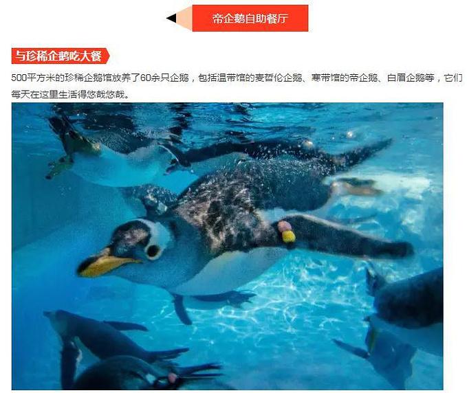 关于珠海长隆的建议图片