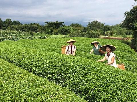 日本平茶会馆旅游景点图片