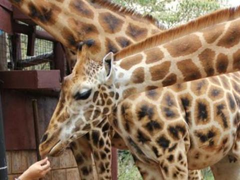 长颈鹿中心旅游景点图片