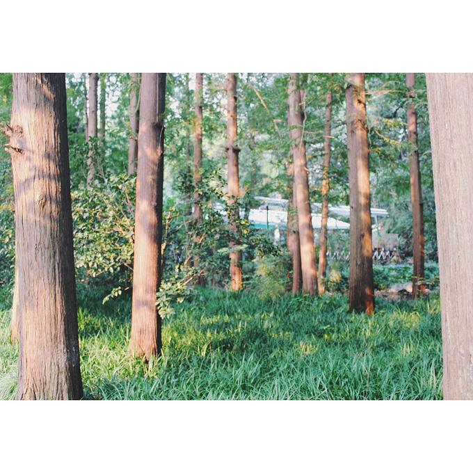 虎跑公园图片