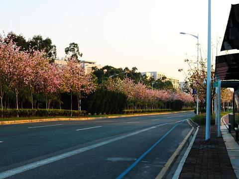 广州大学城旅游景点图片