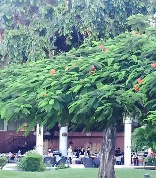 大溪地艾美酒店种植园餐厅