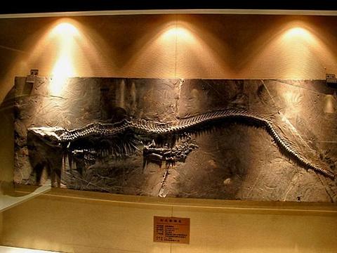 关岭化石群国家地质公园旅游景点图片