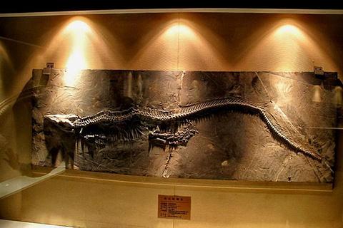 关岭化石群国家地质公园