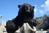 东方熊牧场
