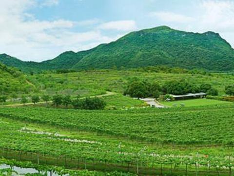 华欣山丘葡萄园旅游景点图片