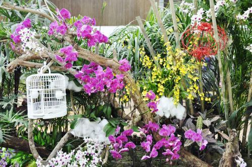 婆罗洲国际兰花展