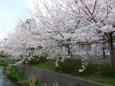 泉佐野市旅游图片