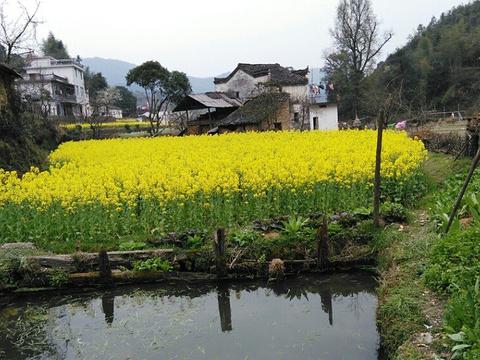 查记酒坊(庆源村店)旅游景点图片