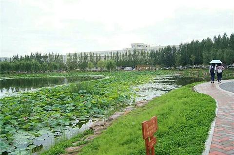 观澜湖公园
