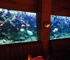 Aquarium Restaurant Yas Marina