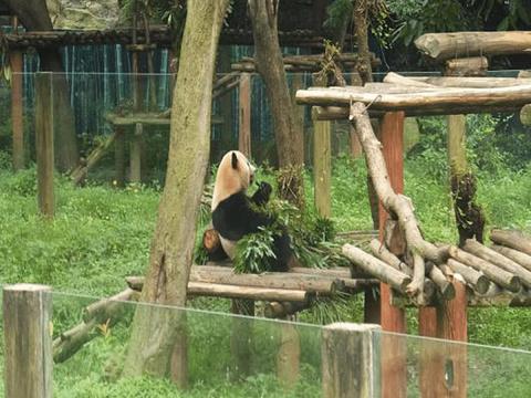 重庆动物园旅游景点图片